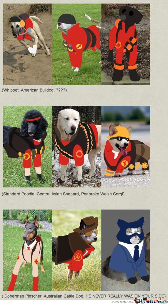 TF2 Dogs