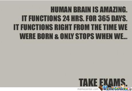 The Brain Is Amazing