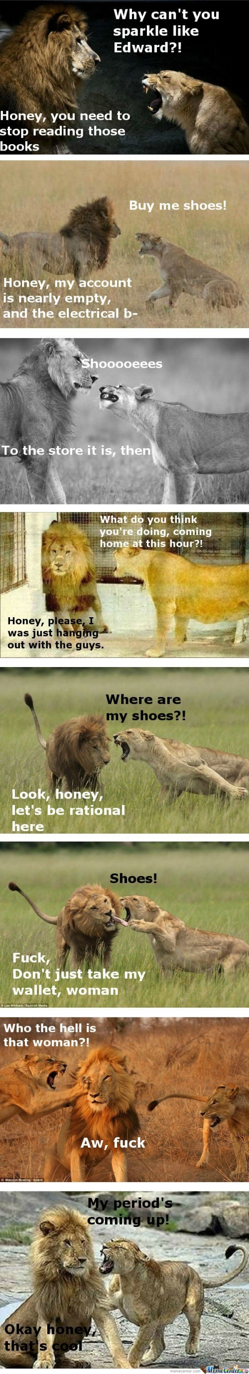 The life of a married man - Lions