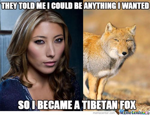 They Told Me I Could Be Anything I Wanted.. So I Became I Tibetan Fox