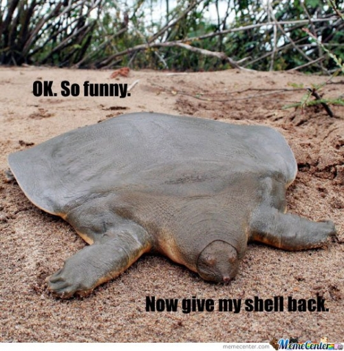 Turtle without shell