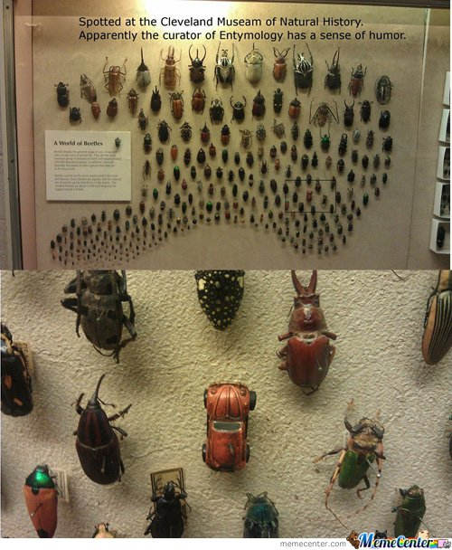 World Of Beetles