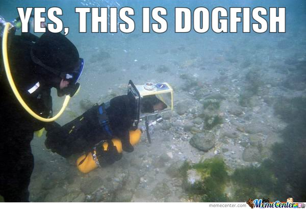 Yes , this is dog fish