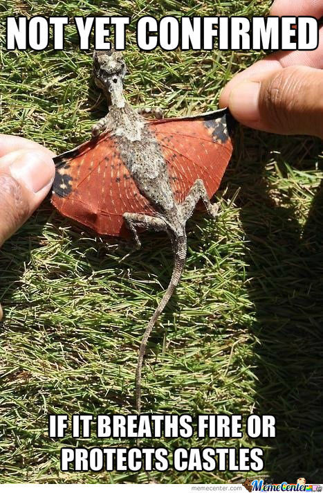 A Baby Dragon!