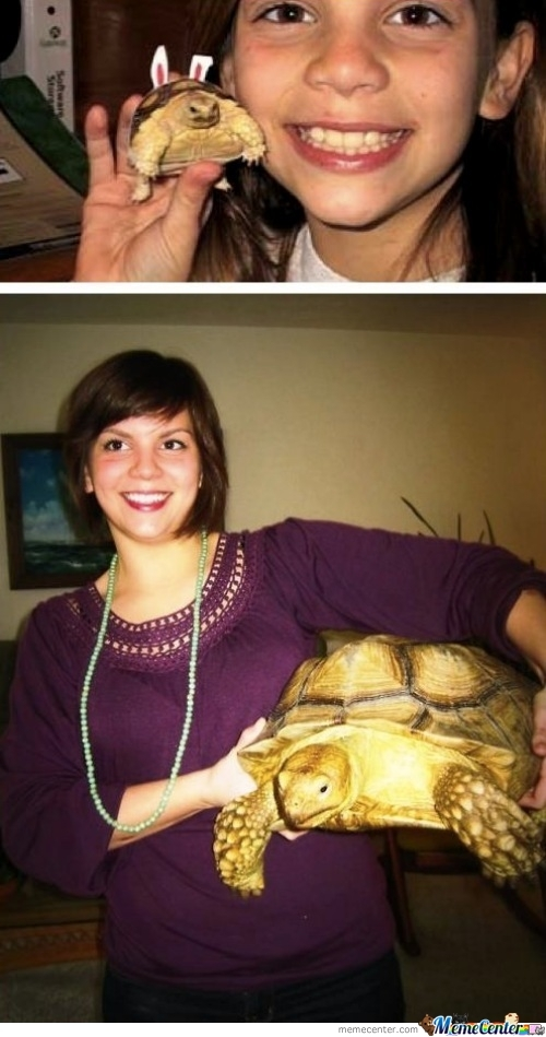 A Turtle After So Many Years