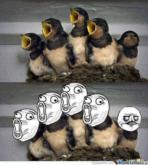 Adorable Birds ^^
