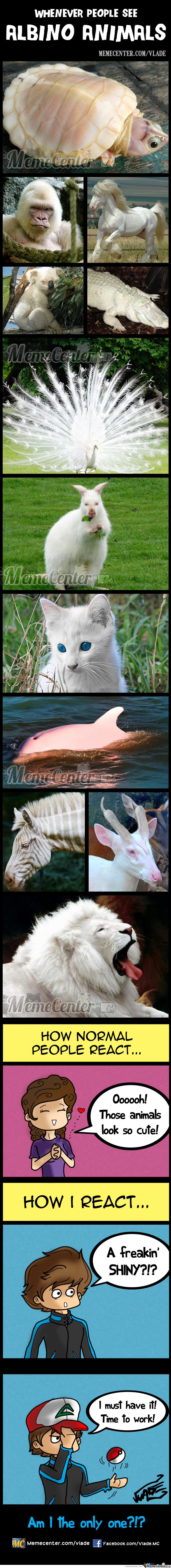 Albino Animals