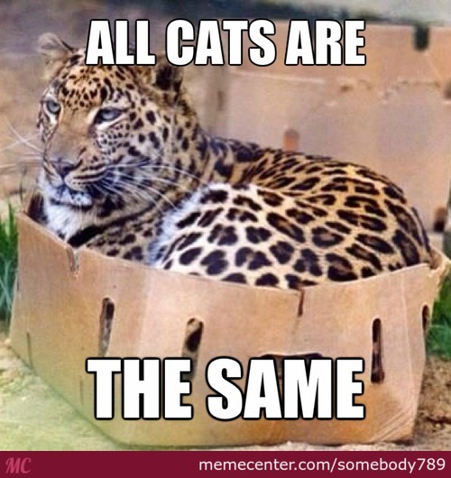All Cats Are The Same