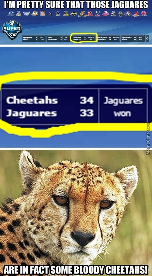 All Jaguares Are Cheetahs!