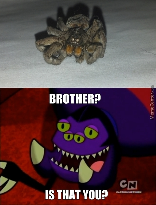 Almost Looks Like Jeff The Spider