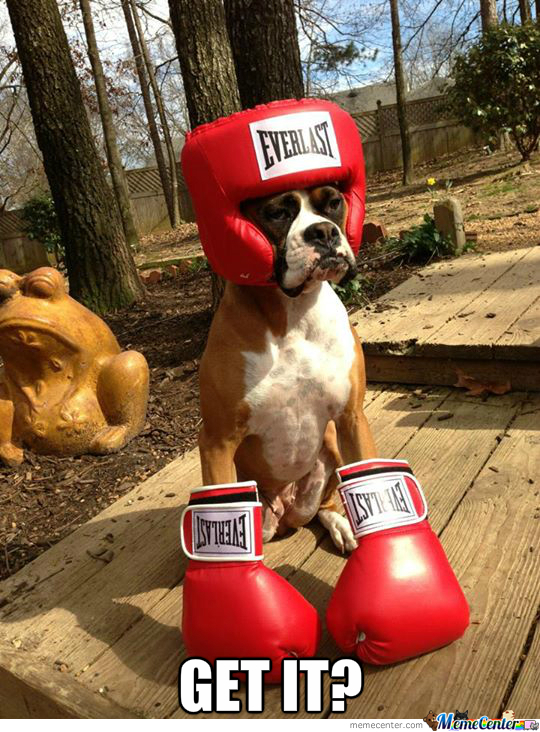 'cause He's A Boxer