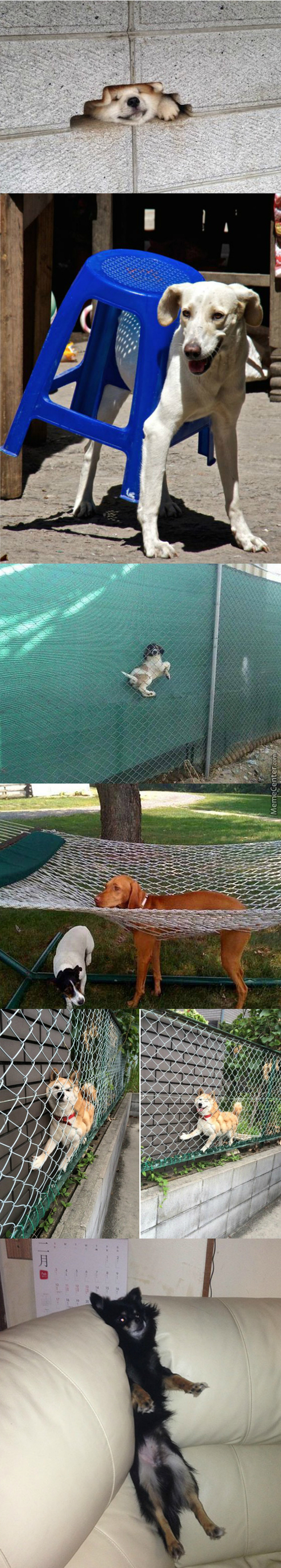 """dogs Who Are Stuck"" Dammit Moon Moon!"