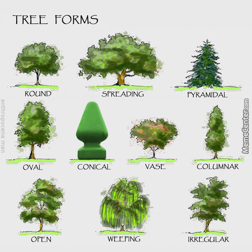 Tree forms memes best collection of funny tree forms pictures for Arbre de jardin a croissance rapide