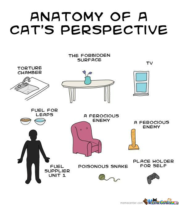 Anatomy Of A Cat's Prespective