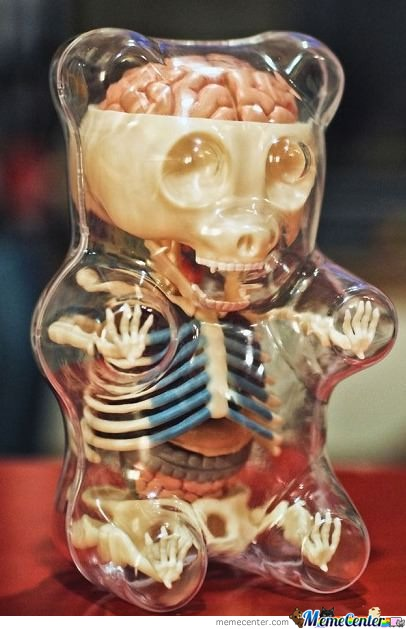 Anatomy Of A Gummy Bear