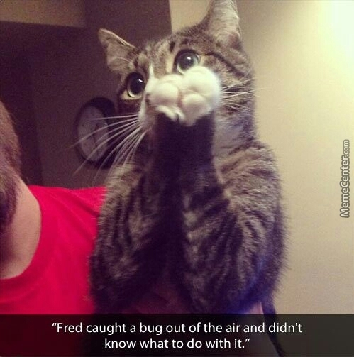 And How Would He React If He Caught Red Dot?