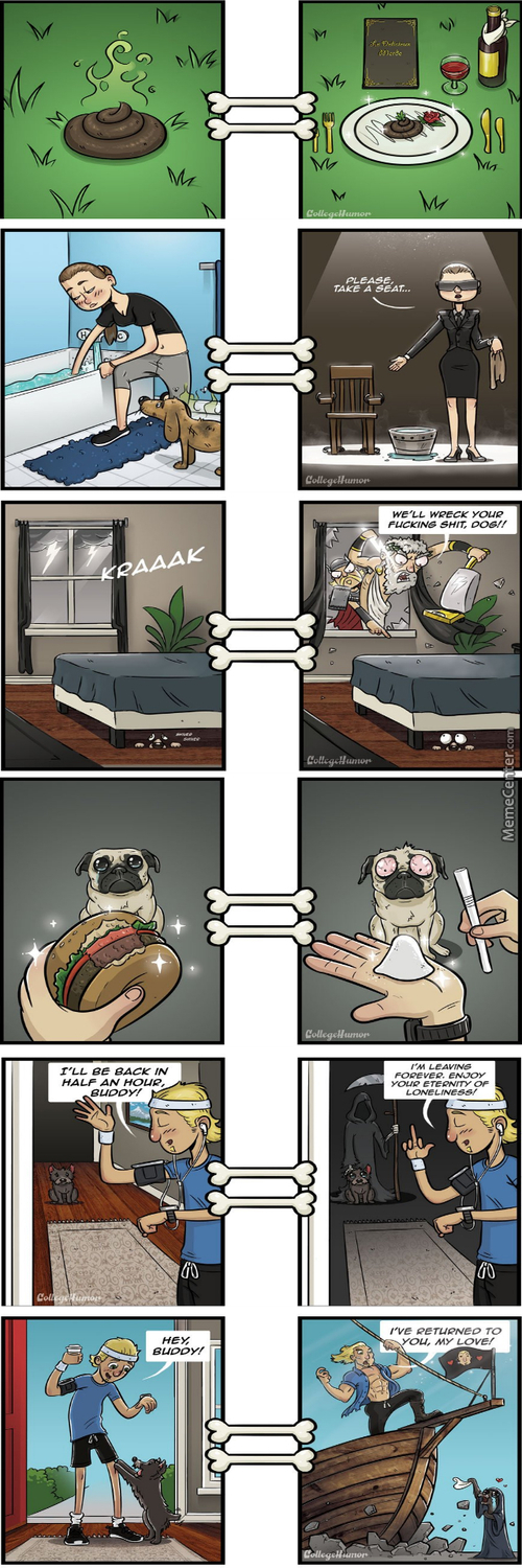 And Thats How Dogs See Our World :d