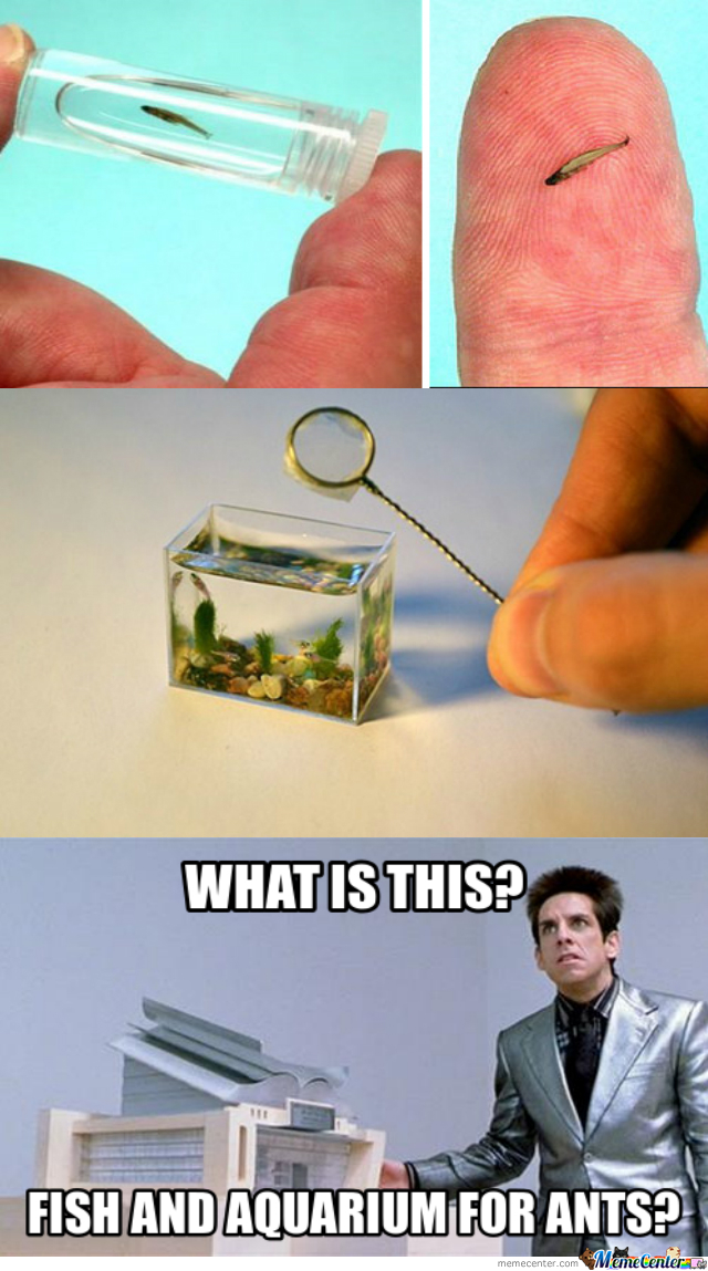 And The Net For Ants Too?