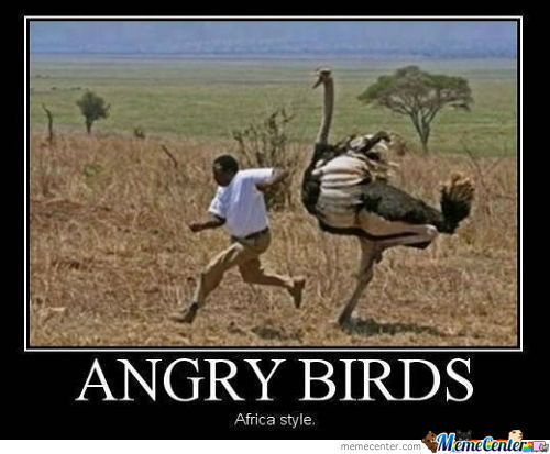 Angry Birds. Africa Style