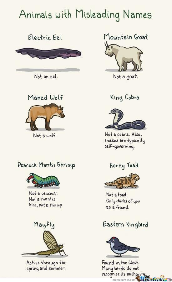 Funny Names For Animals Meme : Animals with misleading names by vince xd meme center