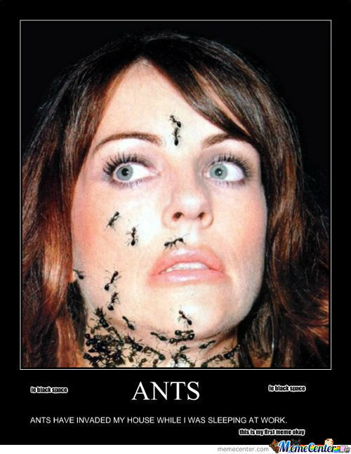Ant Invasion