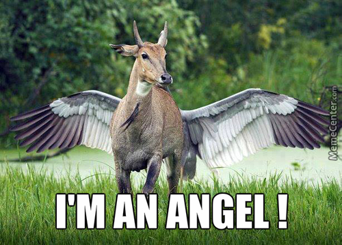 Antelope Angel