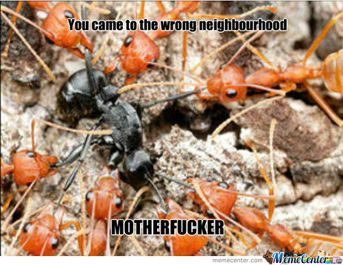 Ants Hoes