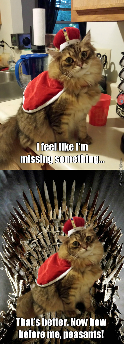 "Any Cat Who Must Say ""i Am The King"" Is No True King."