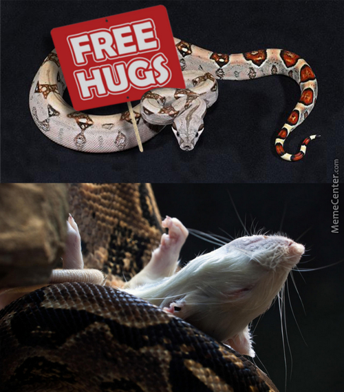 Anaconda snake meme - photo#25