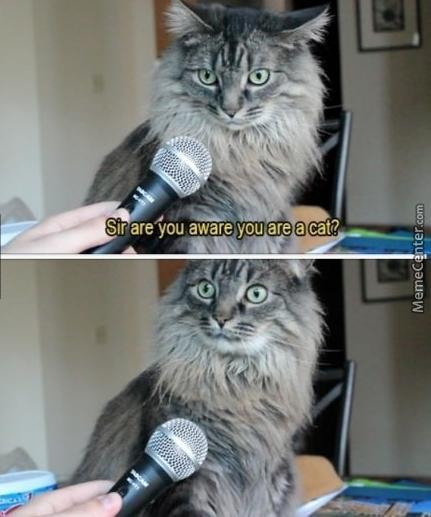 Are You Aware You Are A Cat