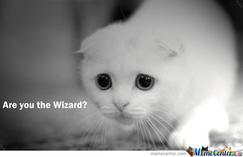 are you the wizard