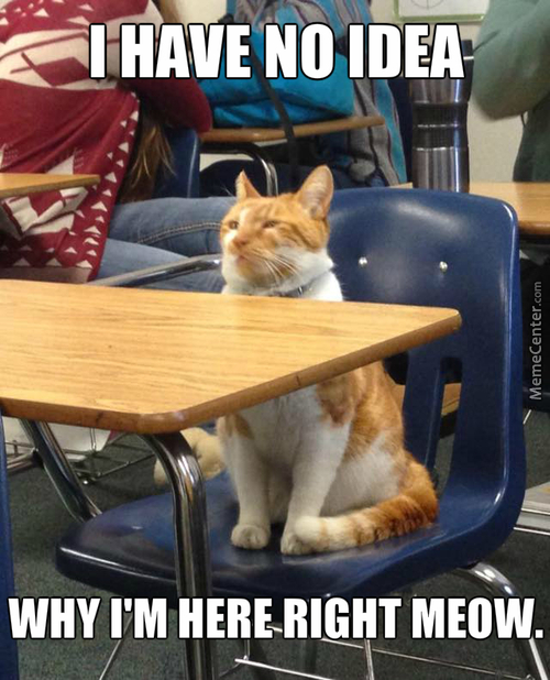 At School, Nobody Knows You're A Cat.