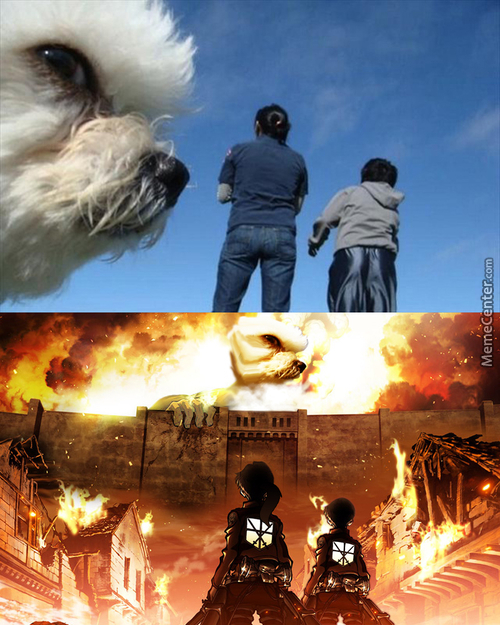 Attack On Dogs!