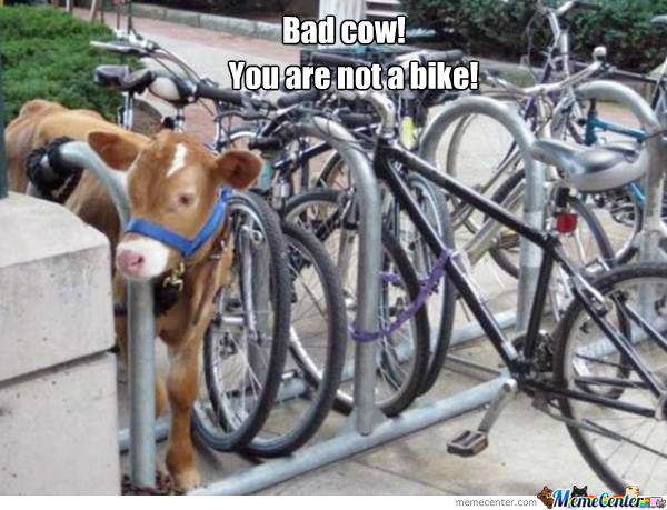 Bad Cow!