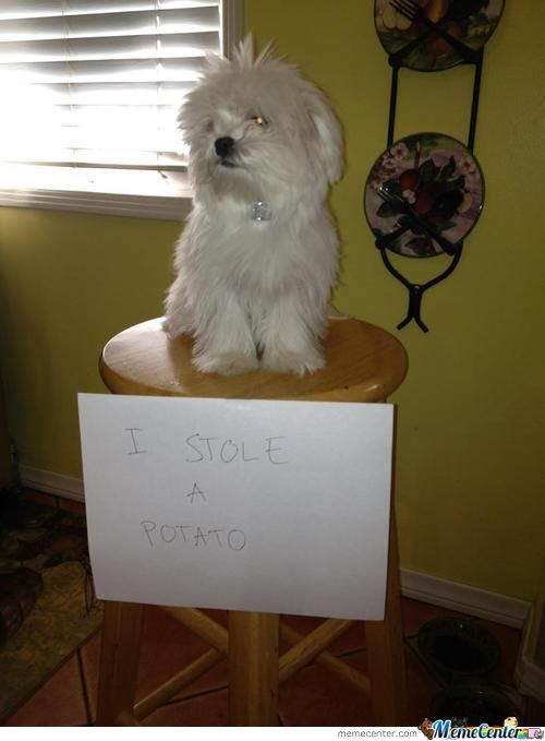 Bad Dog, Go To The Naughty Stool