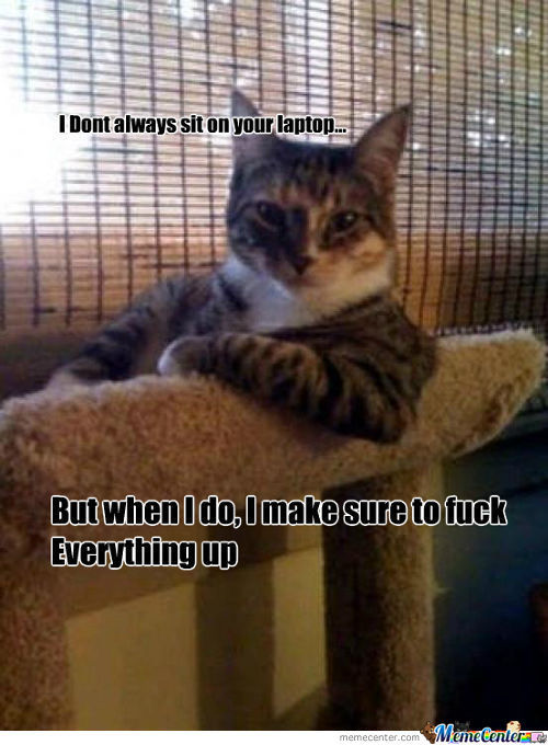 Bad Kitty...