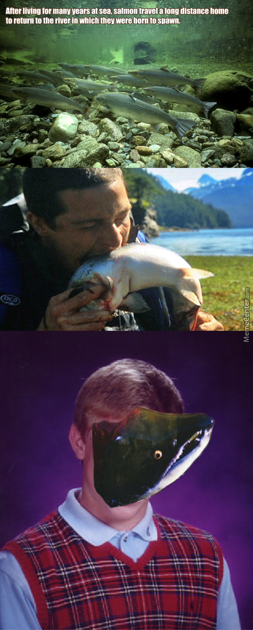 Bad Luck Salmon