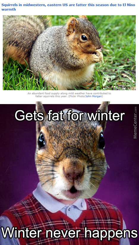Bad Luck Squirrel Might Catch The Diabeetus