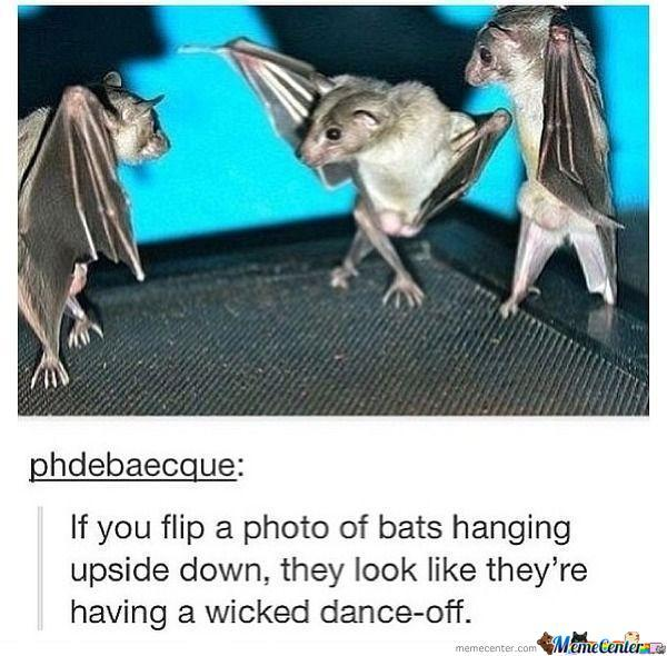 Bat Dance-Off