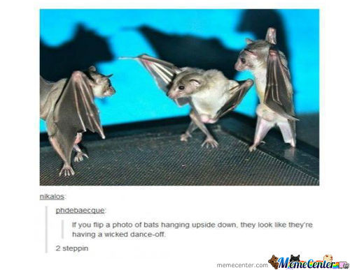 Bats Dance Battle