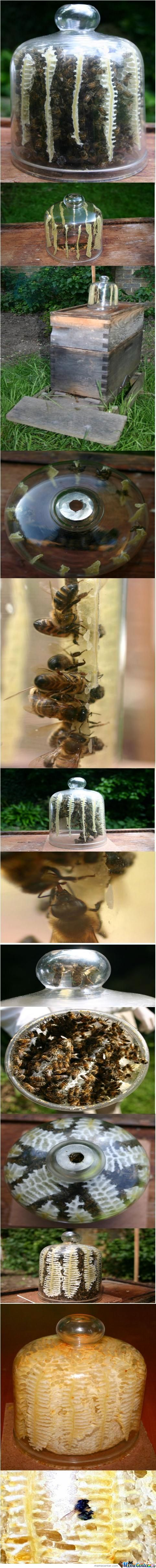 Beeshive In Jar