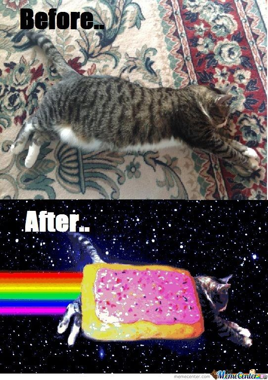 Before Nyan, After Nyan