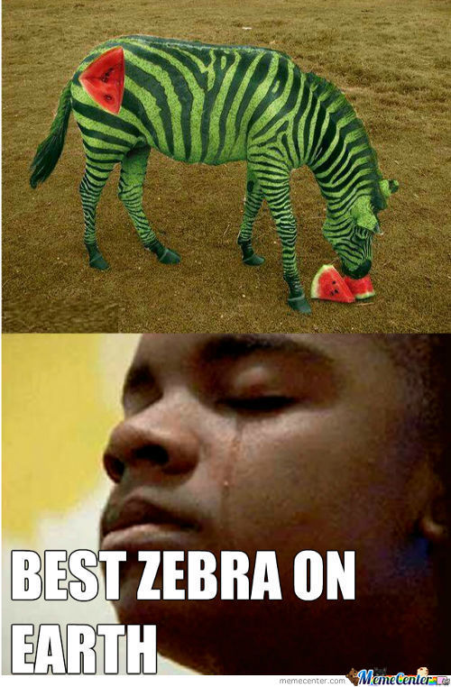 Best Zebra Ever