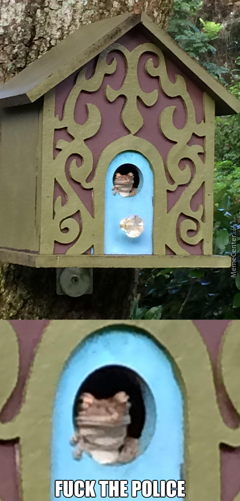 Bird House? Nah Man This A Frog House Now