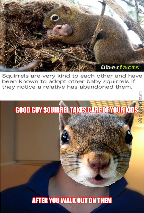 Black Squirrels Are The Worst