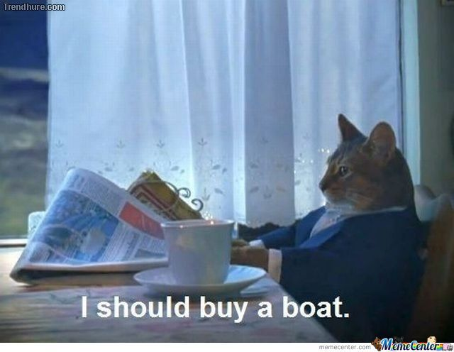 Boats And Cats