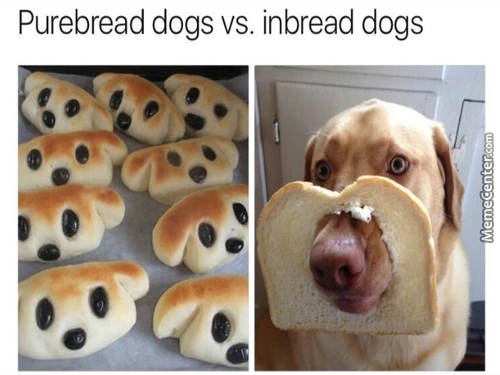 Bread Is Good