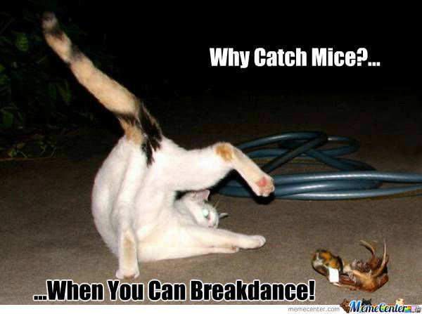 Break-Dancing Cat
