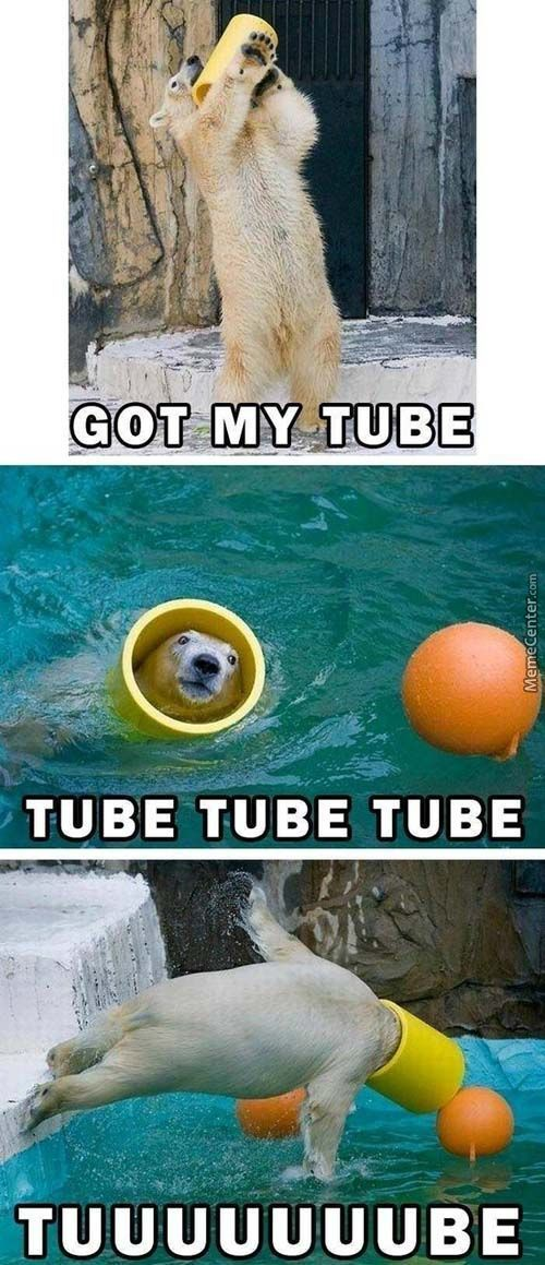 Bro, Do You Even Tube?