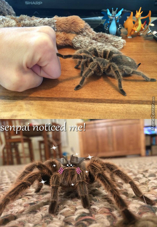 Brofisting With Spider...